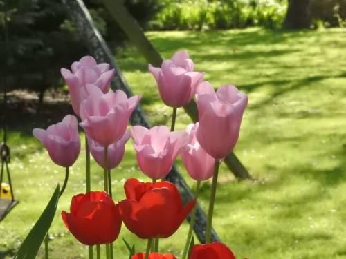 Gîte Rouge Calme et Nature-Gite-Rouge-Calme-et-Nature