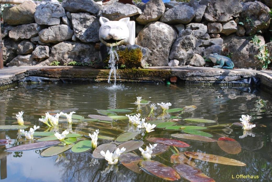 Jardin De L'Argelière-bassin-avec-gargouille