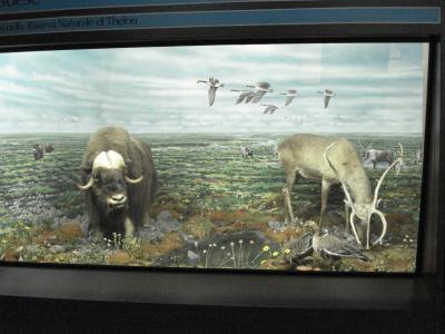 Brieuil sur Chizé Musée d'Histoire Naturelle