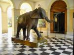 Musée D'Histoire Naturelle-Musee-D-Histoire-Naturelle-bdentree-museum-2964-1197.JPG