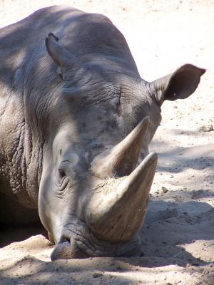 Meursac Parc zoologique de la Palmyre